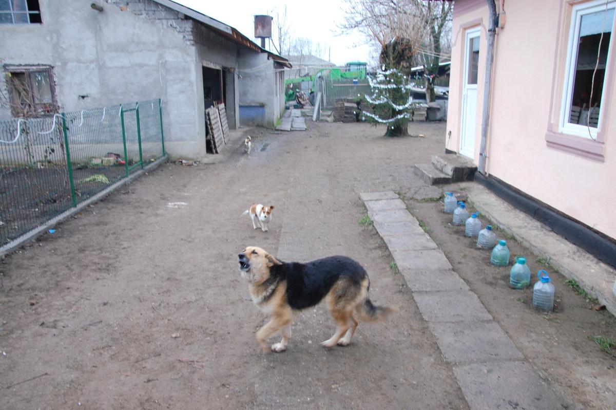 SALVEAZĂ O VIAȚĂ, ADOPTĂ
